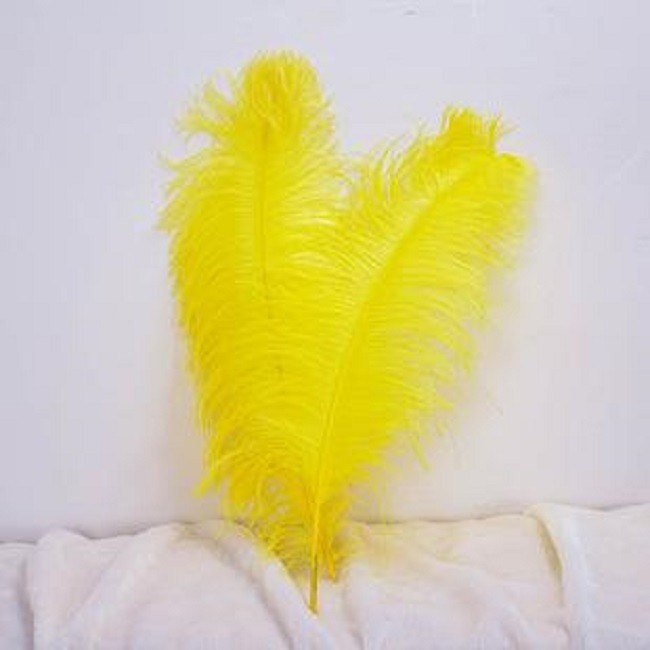 南非进口鸵鸟羽毛厂家直销 南非进口鸵鸟羽毛价格