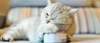 猫罐头十大品牌排行榜