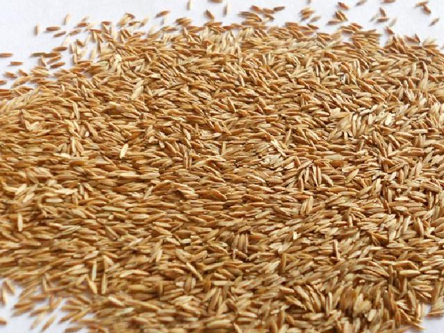 高羊茅种子多少钱一斤 高羊茅种子价格