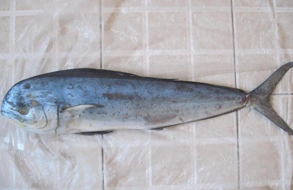 鲯鳅鱼价格 鲯鳅鱼批发