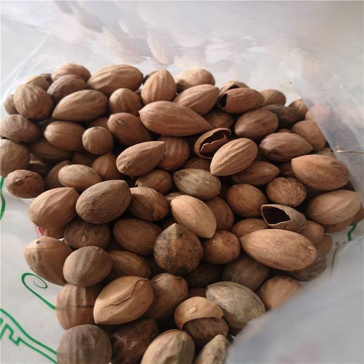 油桐子多少钱一斤 油桐子批发价格