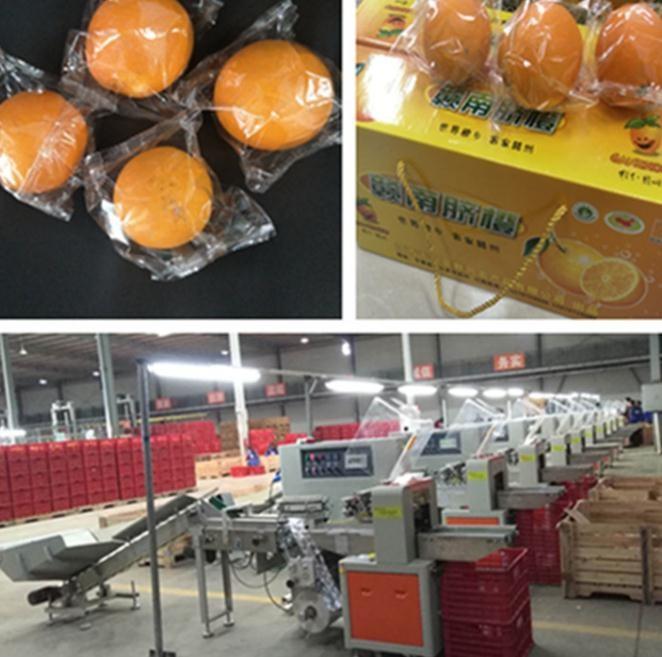 脐橙包装机价格 脐橙包装机厂家直销