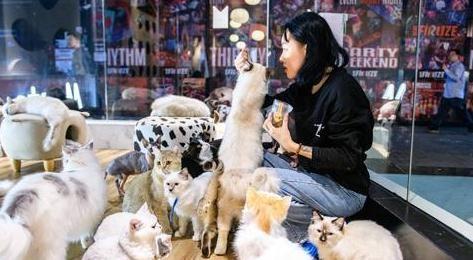 广州宠物市场在哪里 广州宠物市场哪里多又便宜