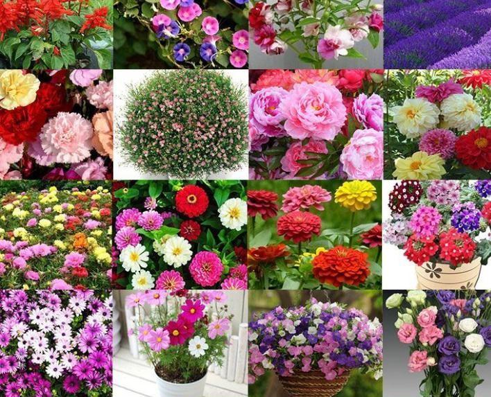 花卉种子在哪里买 花卉种子批发