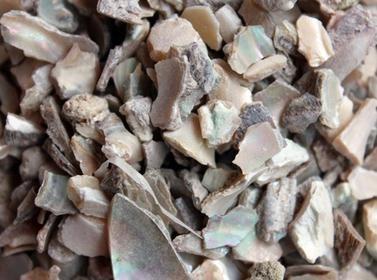 石决明价格多少钱一斤 石决明价格多少钱一克