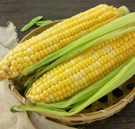 水果玉米价格 水果玉米产地