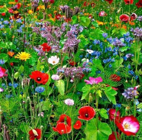 野花组合常用品种价格 野花组合常用品种批发