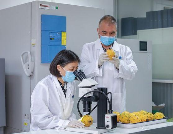 植物检验检疫证书流程 植物检验检疫证书多少钱