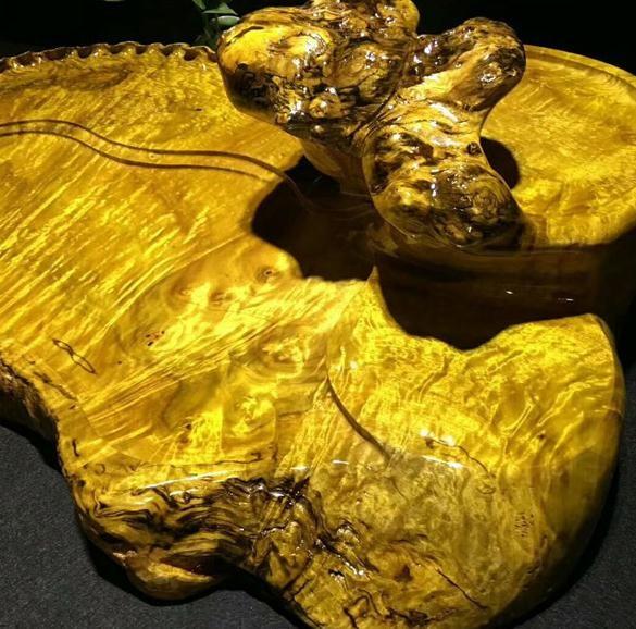 黄金樟木材产地 黄金樟木材价格