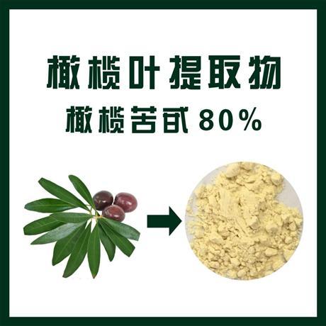 橄榄叶提取物供应商 橄榄叶提取物厂家直销