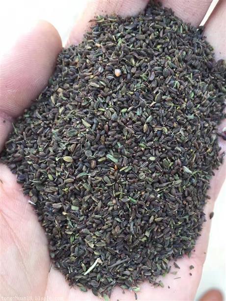 柴胡种子多少钱一斤 柴胡种子价格