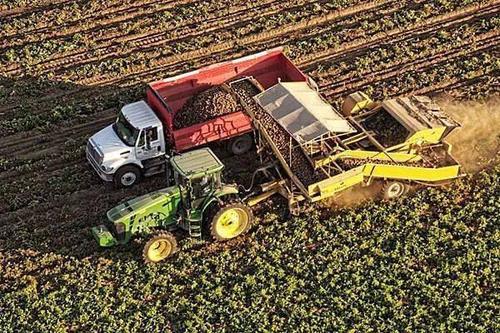 全自动玉米脱粒机报价 全自动玉米脱粒机大全